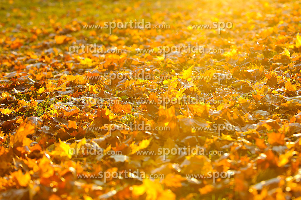 THEMENBILD - Herbststimmung in Knittelfeld, Steiermark, am 02/11/2011. EXPA Pictures © 2011, PhotoCredit: EXPA/ S. Zangrando