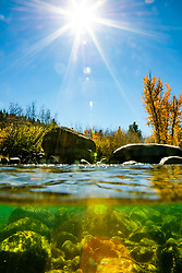 """""""Truckee River in Autumn 22"""" - Over/under autumn photograph of the Truckee River and yellow cottonwood trees in Downtown Truckee, California."""
