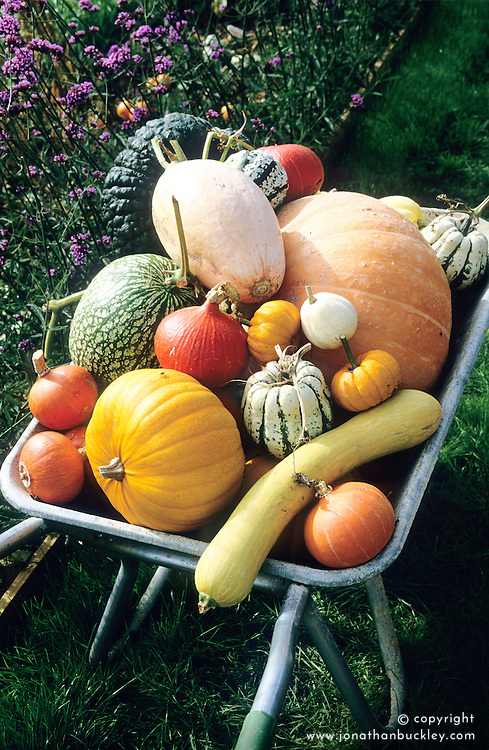 Barrow of pumpkins