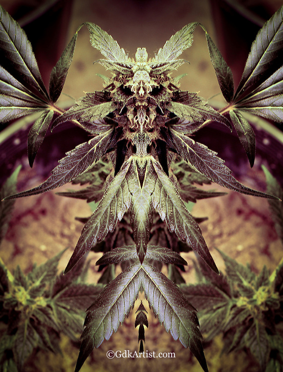 Creative artistic images of marijuana revealing the energy and spirit of this plant medicine.