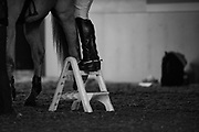 Gasper Van Den Doorn ridden by Mac Cone waits prepares to be mounted during the 2nd round of the Greenhawk Canadian Championship at The Royal Horse Show, TORONTO, CANADA.  November 5 2016