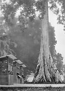 Camopi, Guyane, 2015.<br /> <br /> Bourg artificiel cr&eacute;&eacute; autour d&rsquo;un arbre sacr&eacute; pour regrouper les populations et faciliter l&rsquo;implantation de l&rsquo;administration fran&ccedil;aise sur le Haut-Oyapock, Camopi se situe &agrave; pr&eacute;sent &agrave; l&rsquo;int&eacute;rieur du trac&eacute; d&rsquo;un parc national. <br /> <br /> En 1992 lors du premier Sommet de la Terre la France annonce sa volont&eacute; de cr&eacute;er un parc en Guyane. En f&eacute;vrier 1993, une mission d&rsquo;&eacute;tude se met en place. D&rsquo;un caract&egrave;re trop environnementaliste d&eacute;laissant les populations, le premier projet est rejet&eacute; en 1995. Un second, &eacute;labor&eacute; entre 1998 et 2000 obtient l&rsquo;adh&eacute;sion des communaut&eacute;s locales, mais essuie le refus des collectivit&eacute;s territoriales. Un des points de blocage concerne l&rsquo;acc&egrave;s aux ressources naturelles et leur exploitation. Finalement, le projet suivant est ent&eacute;rin&eacute; en 2007 et officialise l&rsquo;existence du Parc Amazonien de Guyane. <br /> <br /> Il englobe plus de 3 millions d&rsquo;hectares compris dans le centre et la portion sud de la Guyane correspondant &agrave; la zone &agrave; acc&egrave;s r&eacute;glement&eacute;. Avec une &laquo; zone de coeur &raquo; et une &laquo; zone de libre adh&eacute;sion &raquo; qui concerne les communes de Maripasoula, Papa&iuml;chton, Sa&uuml;l, Saint-Elie et Camopi, c&rsquo;est la plus grande zone prot&eacute;g&eacute;e d'Europe.<br /> Ses missions sont celles des parcs nationaux fran&ccedil;ais avec des adaptations li&eacute;es aux contextes guyanais. Le PAG a pour but &laquo; de contribuer au d&eacute;veloppement des communaut&eacute;s d&rsquo;habitants qui tirent traditionnellement leurs moyens de subsistance de la for&ecirc;t, en prenant en compte leur mode de vie traditionnel et de participer &agrave; un ensemble de r&eacute;alisations et d&rsquo;am&eacute;liorations d&rsquo;ord