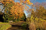 Colourful autumn foliage in The Cambrdge Botanic Garden in Cambrdge, UK