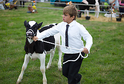 © Licensed to London News Pictures. <br /> 13/08/2014. <br /> <br /> Danby, North Yorkshire, United Kingdom<br /> <br /> A young boy leads his calf around the show ring during judging at the Danby Agricultural Show in North Yorkshire. <br /> <br /> This year is the 154th show which was founded in 1848. It is the oldest agricultural show in the area and offers sheep dog trials, judging of a variety of different animals such as cattle, sheep, ferrets, horses and rabbits along with different classes of horticulture and dairy. <br /> <br /> Photo credit : Ian Forsyth/LNP