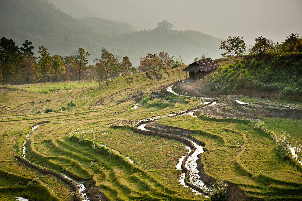 A terrace farm in the Naga Hills of western Myanmar, where farmers still use primitive irrigation and planting methods without the benefit of machinery.