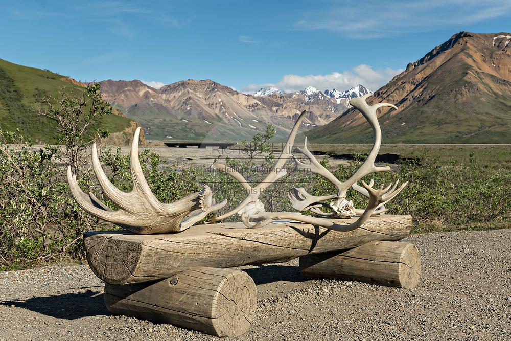 Elk antlers displayed on a bench at the Teklanika River in Denali National Park Alaska. Denali National Park and Preserve encompasses 6 million acres of Alaska's interior wilderness.