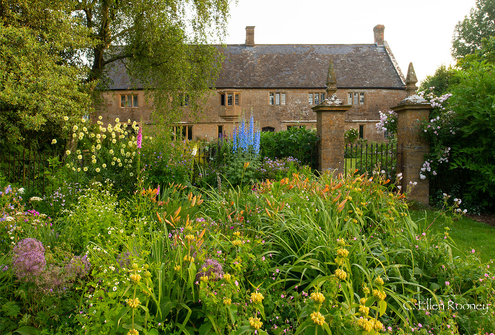 A herbaceous border of Delphinium Pacific hybrid, Hemerocallis, Cephalaria gigantea and Phlomisrussliana in front of Lower Severalls Farmhouse, Crewkerne, Somerset, UK