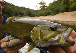 Ozark native smallmouth on a secluded creek