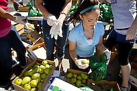 Gabby Vietri helps sort and bag pears during the Second Harvest Food Bank distribution Thursday at Lakes Magnet Middle School in Coeur d'Alene. This is the fourth year Second Harvest has teamed up with Lakes Magnet Middle School to provide fresh produce to low-income families and senior citizens.