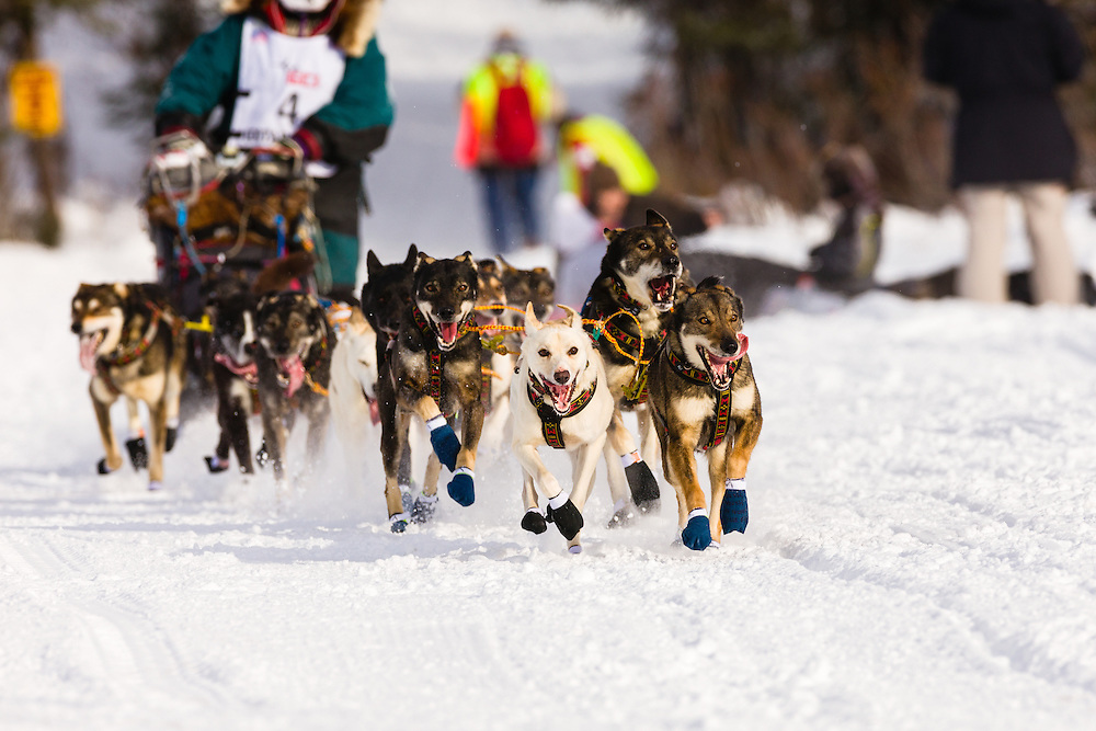 Musher Jodi Bailey competing in the 41st Iditarod Trail Sled Dog Race on Long Lake after leaving the Willow Lake area at the restart in Southcentral Alaska.  Afternoon.