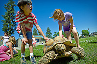 Evan Brown and Jasmine Arveson inspect the shell of Big Louie, a 120-pound tortoise. The large reptile, and another smaller tortoise, was brought by Ron Petersen to the CDA4Kids class Monday at Bryan Elementary.