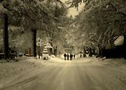 Snow Scene nature photography,nature photographers,risdon photography