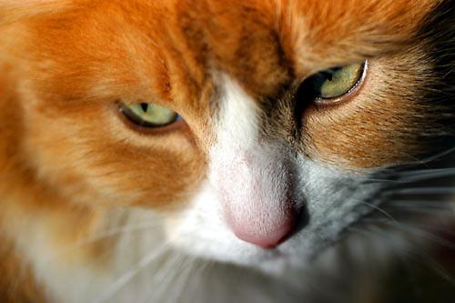 dexter the cat.