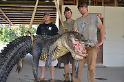 'We're gonna need a bigger boat': Gator hunters break TWO state records with monster catches on the same day including a 727lb reptile hauled in by a UPS worker<br /> <br /> Within a few hours of alligator hunting season opening, the record for the heaviest and longest reptiles to be caught in Mississippi had been set and broken several times.<br /> The first record was set early on Sunday, with a 10ft reptile, weighing 295.3lb, which took the heaviest and longest titles for a female alligator.<br /> Just a few hours later however, first-time hunter Beth Trammell, of Madison, helped haul in a 723.5lb male alligator. Her catch broke the state record, but only for a few hours.<br /> Later in the day UPS worker Dustin Bockman was part of a three-man team who caught a 13ft long, 727lb beast from the Mississippi. <br /> 'We're going to cook it for sure,' he told Gulf Live. 'There's plenty for me and everybody else.'<br /> Alligators had nearly been hunted to extinction in Mississippi in the 1960s but a successful conservation program now means the state needs controlled hunting of the reptiles. <br /> It offers permits to a select number of people each year, who are able to hunt in public waters from August 30 to September 9.<br /> It took Mr Bockman, his brother and a friend, nearly 12 hours to catch the huge gator. <br /> After two hours of trailing it, they got close enough to shoot it with a crossbow, which is where the fight between man and beast began, the Clarion-Ledger reported. <br /> 'He would go to the bottom and sit like a log. You couldn't do nothing with him,' Mr Bockman said. <br /> Compared to what came next, reeling the 727lb beast in was nothing.  <br /> <br /> After it was dead, the hunters were faced with the dilemma of how to get the carcass in their boat. 