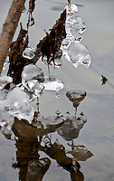 Ice formations hanging from branches at the water's edge look like small bells in reflection.  Photo taken during the extreme weather of February 2012.