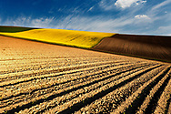 Dobrudzha fields with rapeseed and wheat at sunset