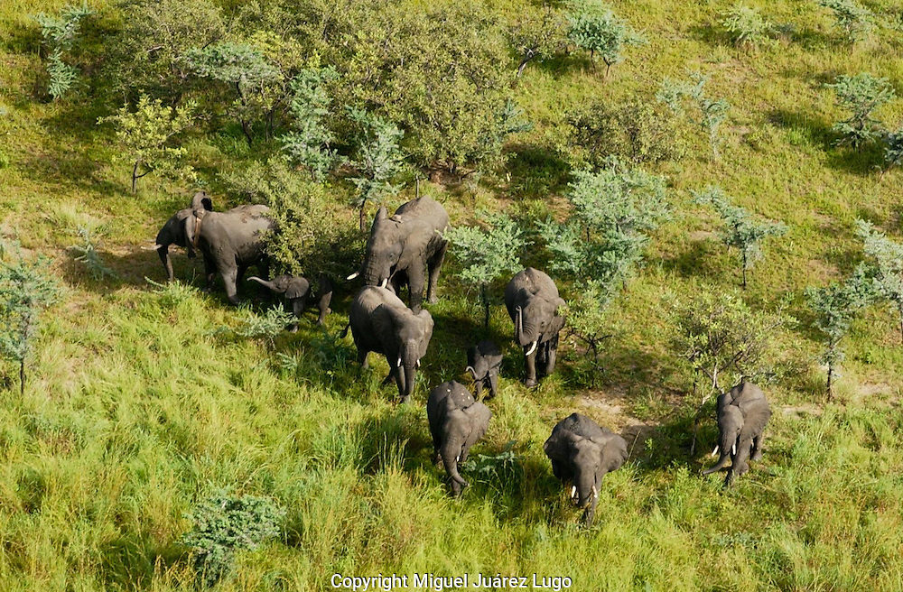 A group of elephants in the Bandingalio National  Park.  Conservationists have placed satellite collars on animals in South Sudan to unravel patterns of unknown migration routes in wildlife living in the Boma-Jonglei Landscape. (PHOTO: MIGUEL JUAREZ)