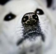 Close-up of dog snout