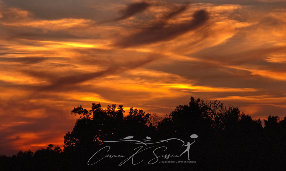 The trees are silhouetted against a fiery sky as the sun sets in Union City, Tenn., Oct. 10, 2010. (Photo by Carmen K. Sisson/Cloudybright)