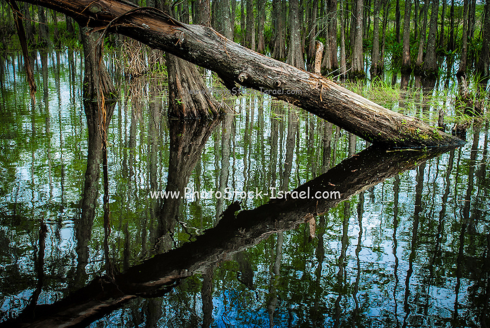 Swampland Louisiana bayou, USA