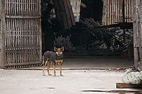 Dog looking at camera, standing in front of a workshop, in a village in China.