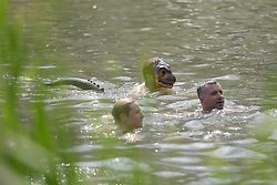 © Licensed to London News Pictures. 08/08/2015. Cornbury Park, Charlbury, Oxfordshire. Jumping into the Lakes for a swim. The Wilderness Festival 2015 at Cornbury Park in Oxfordshire. Photo credit : MARK HEMSWORTH/LNP