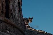 Namib 2015 - Wildlife