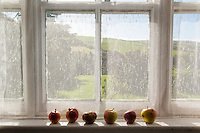 Apples on a window sill, Kerry, Ireland.