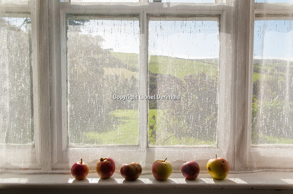 Apples on a window sill, Kerry, Ireland.