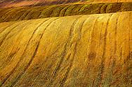 Spring fields in Dobrudzha region