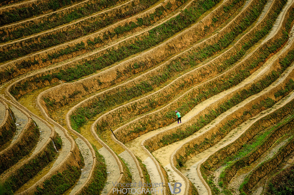 A close look of terraced rice fields, Dragon's backbone Rice terraces, China