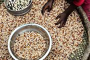 A girl sorts through grains outside her home in Demier, Haiti.