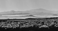 ESTEPA  DE COIRONES (Festuca gracillima - fam. poaceas) EN SUELO DE PIEDRAS VOLCANICA Y CONOS VOLCANICOS, RESERVA PROVINCIAL LA PAYUNIA (PAYUN, PAYEN), MALARGUE, PROVINCIA DE MENDOZA, ARGENTINA (PHOTO © MARCO GUOLI - ALL RIGHTS RESERVED)