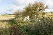 Falkner's Circle remains of prehistoric stone circle, near Avebury, Wiltshire, England, UK