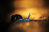 Urban Snails - Bristol