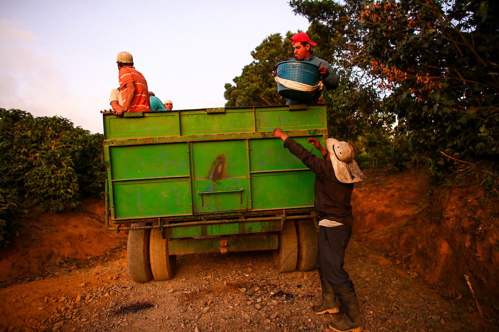 Pickers deliver coffee on Starbucks Hacienda Alsacia coffee farm during the 2016 Starbucks Origin Experience for Partners. Photographed in January 2016. (Joshua Trujillo, Starbucks)