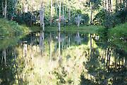 Madagascar, Vakona Forest,