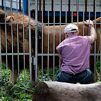 Frankrijk Lieusaint,21 mei 2015.<br /> Stichting AAP die zich inzet voor opvang en welzijn van verwaarloosde dieren waaronder diverse apensoorten haalt nu verwaarloosde 2 tijgers en 2 leeuwen op bij een failliete circus in het plaatsje Lieusaint in de buurt van Parijs om ze vervolgens een betere toekomst te geven in opvangcentrum Primadomus in de buurt van Alicante Spanje<br /> Op de foto: Eigenaar en oud circusbaas monsieur Bouillon neemt afscheid van zijn leeuw Reza.<br /> <br /> <br /> <br /> Foto: Jean-Pierre Jans