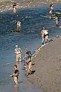 Dozens of people snag fish for silver salmon in summer along Potter Creek in the Chugach State Park outside Anchorage, Alaska.