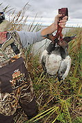 Successful hunters examining their bag during a Manitoba Diver Hunt
