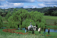 Helicopter landing at Greenwood Ridge Vineyards, near Philo, Mendocino County, California