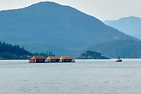 Tugboat towing barges, Horseshoe Bay, Vancouver, British Columbia, Canada   Photo: Peter Llewellyn