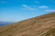 A group of walkers traverse a dirt path descending from  Pen Y Fan in Brecon Beacons National Park, Wales, Powys, United Kingdom.  Pen Y Fan is the highest point in the Brecon Beacons hill and mountain range in South Wales. The National Park was established in 1957 due to the spectacular landscape which is rich in natural beauty and is run by the National Trust.  (photo by Andrew Aitchison / In pictures via Getty Images)
