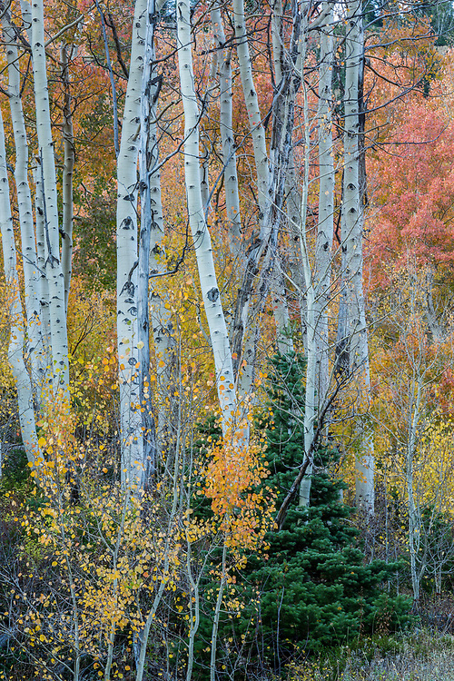 Fall colors in Utah's Little Cottonwood Canyon are about as scenic as you can get.