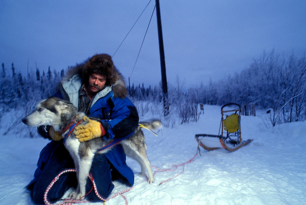 USA, Alaska, Delta, Dog musher Frank Cole holds sled dog during winter training run along Alaska Highway