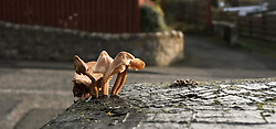 Still life growing even as the autumn heads into winter in Penicuik.<br /> <br /> (c) Ger Harley | Edinburgh Elite media