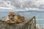 Wild Primates of the Med