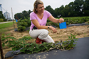 "Anne, owner of Agriberry, operates a CSA near Richmond, VA. She is showing off a berry plant that was planted by a CSA member on a ""planting"" day where Anne invited members out to plant their own berries (and then receive all their fruit). Anne also helps youth learn about farming."