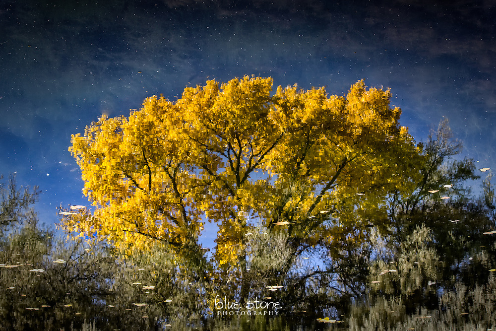 The jubilation of an autumn cottonwood in the southwest is captured in a reflection.<br /> <br /> Wall art is available in metal, canvas, float wrap and standout. Art prints are available in lustre, glossy, matte and metallic finishes.