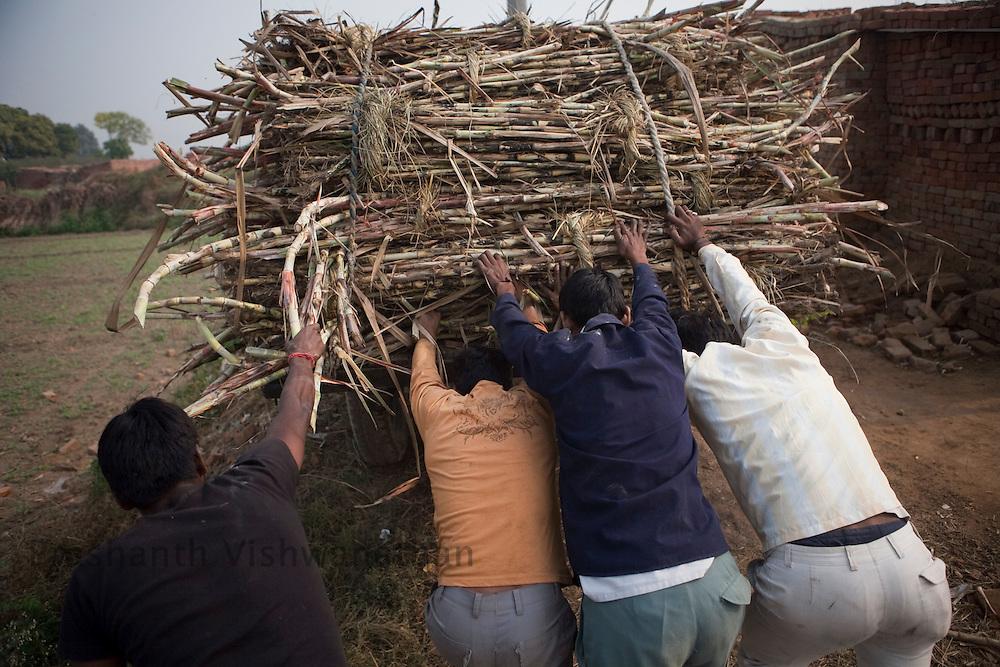 Farmers push bullock cart up a slope, while transporting cut suagrcane to a nearby sugar mill, in the outskirts of Modi Nagar, in Uttarpradesh, India, on Friday, November 12, 2010. Photographer: Prashanth Vishwanathan/Bloomberg News